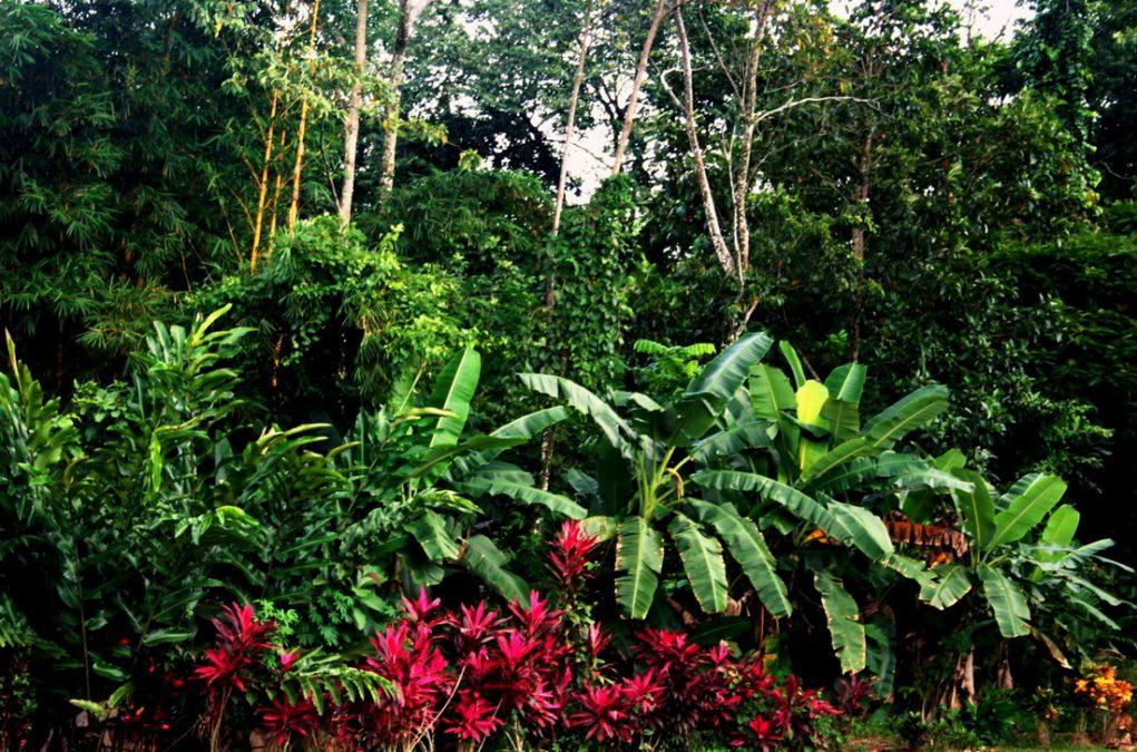 Walking in the Garden of Eden Spirit Reality