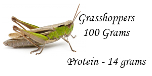 "Israelis use grasshoppers as protein food source ""to feed the world."""