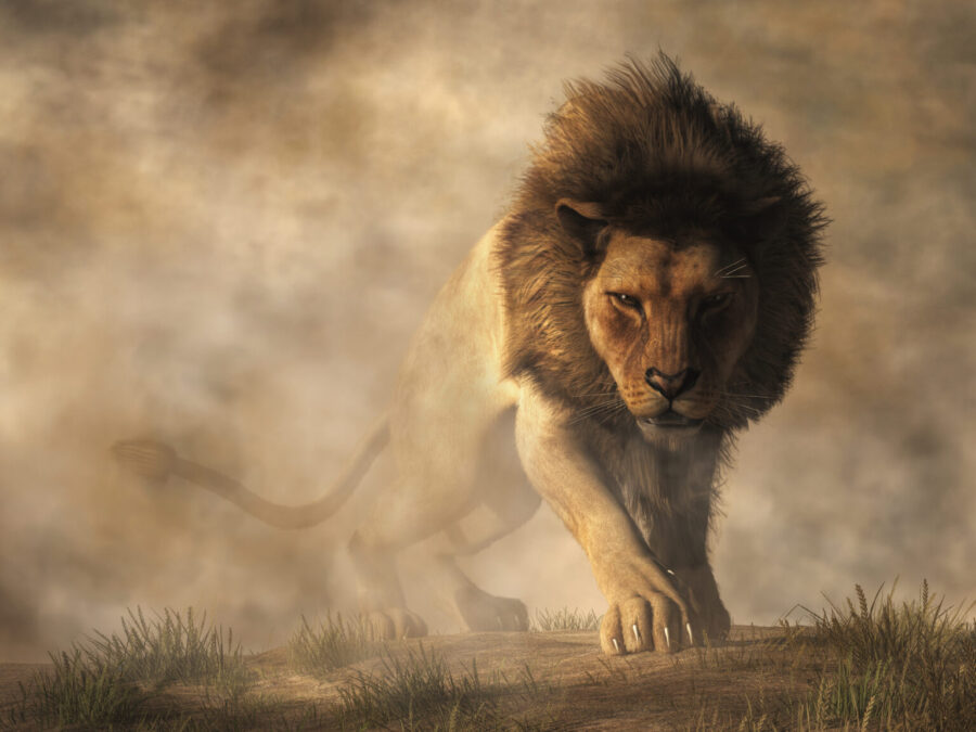 THE LION KING IS ON THE MOVE – By Christy Johnston